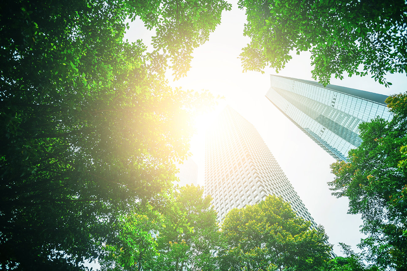 A Decade of Green: China's Top Sustainability Trends in 2020